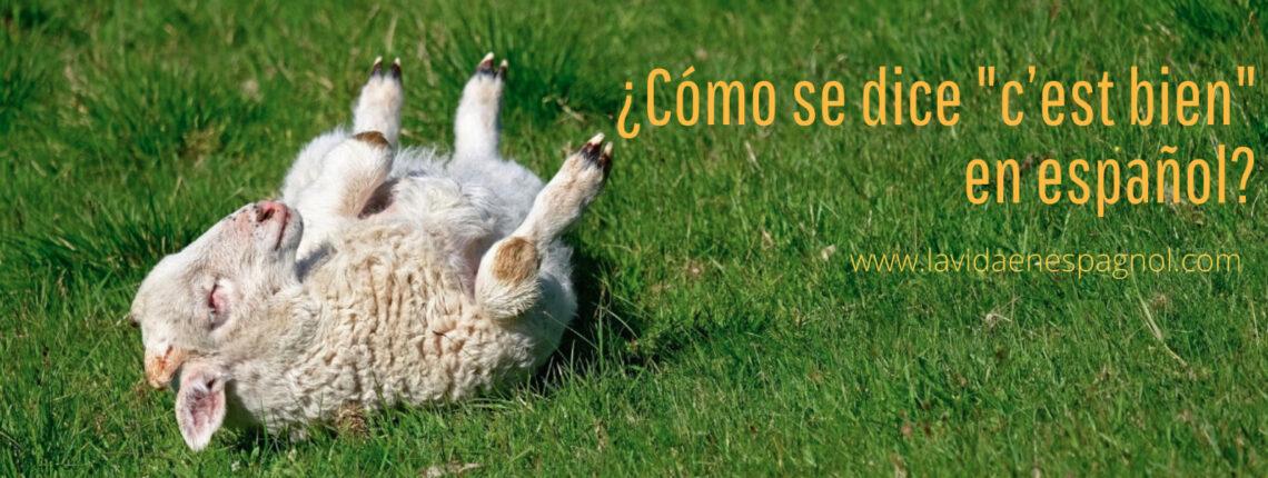 cómo se dice c'est bien en español